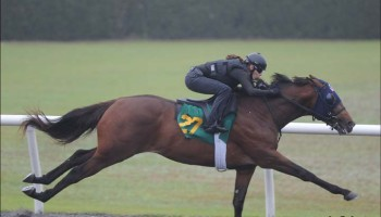 Hip 27 Super Saver-Waltzing With Deb  at OBS sales in Ocala Fl March 7.2014